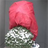 Rot eingefärbtes Wintervlies als Winterschutz vor Pflanzen im Winter.