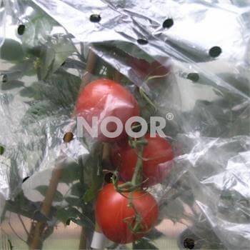 Tomatenhaube 0,65x10m gelocht 20µ für 10 Tomaten