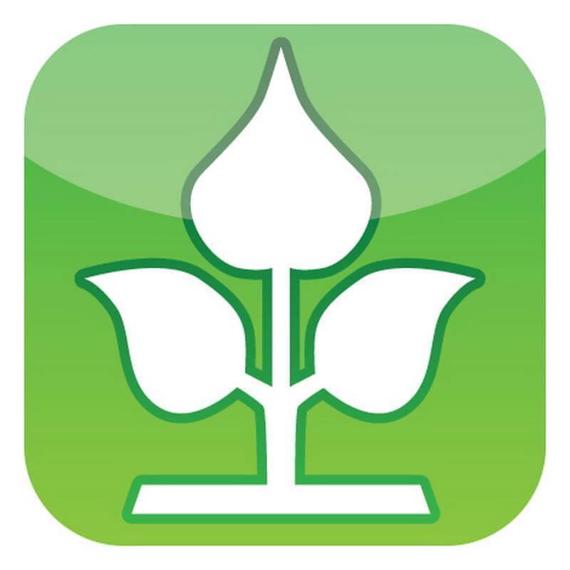 Echter heller Bambus ein Naturprodukt